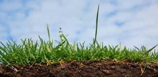 Подготовка почвы под посадку